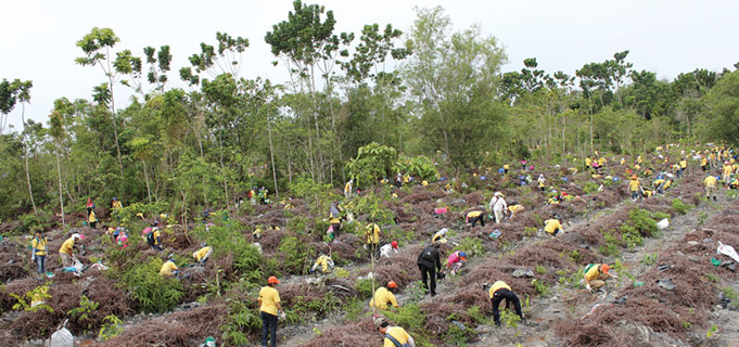 The planting of trees in Bidor Town, Malaysia