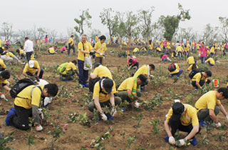 The planting of trees in Suzhou City, China