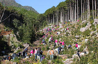 Tree Planting Activities in Japan