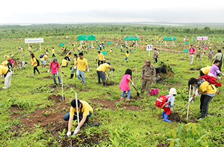 Tree Planting Activities Outside Japan